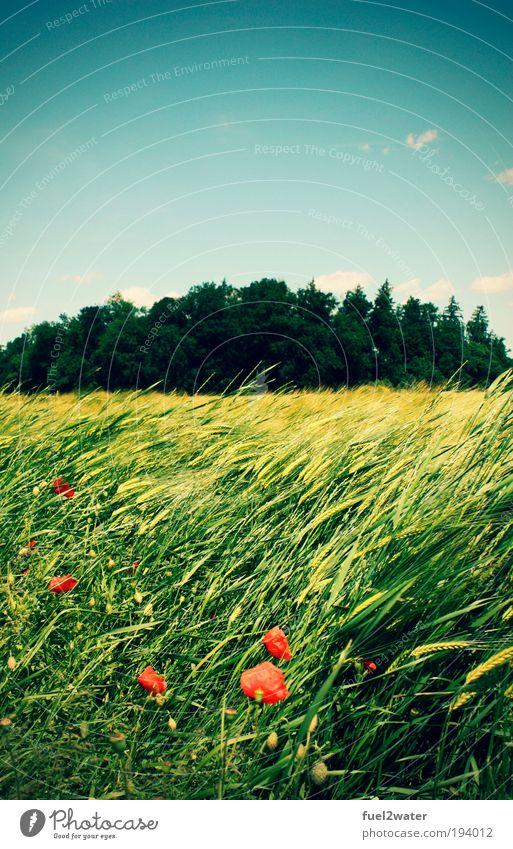 Summer Natur Blume grün rot Sommer Ferien & Urlaub & Reisen Tier Wiese Gras Landschaft Stimmung Feld Fröhlichkeit heiß Unendlichkeit Duft