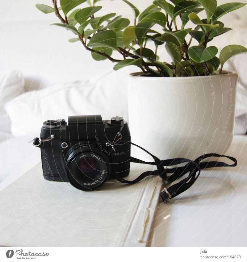 Waiting for Sunshine Möbel Sofa Tisch Raum Wohnzimmer Fotokamera Pflanze Topfpflanze Sammlung Sammlerstück Holz ästhetisch hell grün schwarz weiß Blumentopf