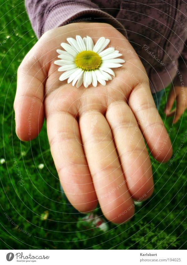 Blümchen? Kind Natur Sommer Hand Blume Mädchen Umwelt Frühling Blüte Glück Gesundheit Garten Freundschaft Haut Lifestyle Kindheit