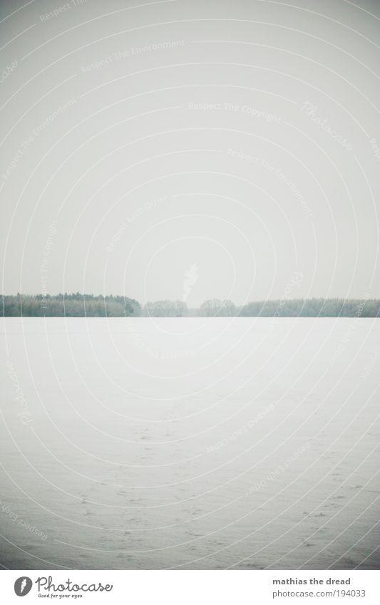 GRAUZONE Umwelt Natur Landschaft Horizont Winter schlechtes Wetter Eis Frost Schnee Pflanze Baum Wiese Feld dunkel Unendlichkeit kalt Einsamkeit Endzeitstimmung