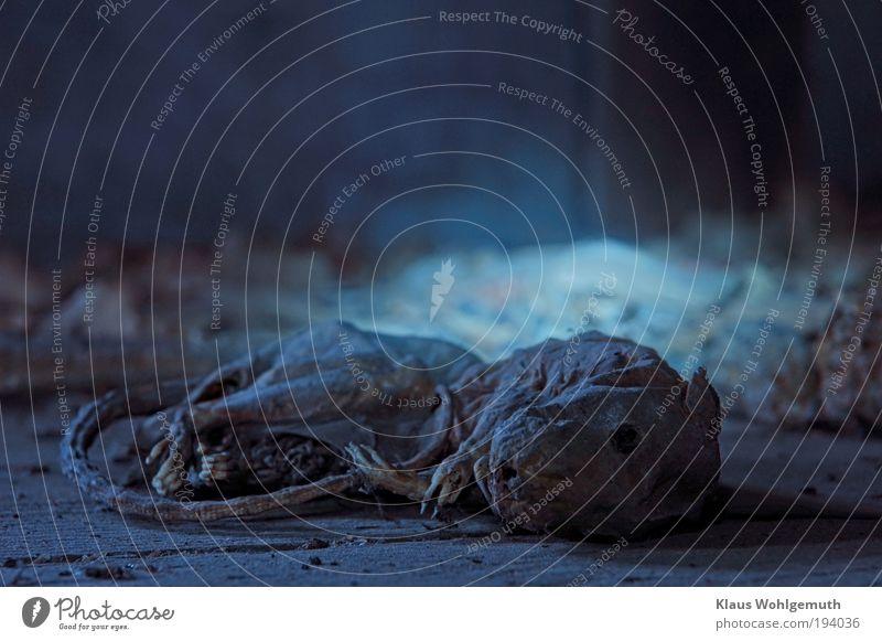 Warte bis es dunkel wird! Tier Tod grau braun liegen gruselig trocken Ekel Nagetiere bewegungslos Keller vertrocknet Experiment Ratte Kontrast