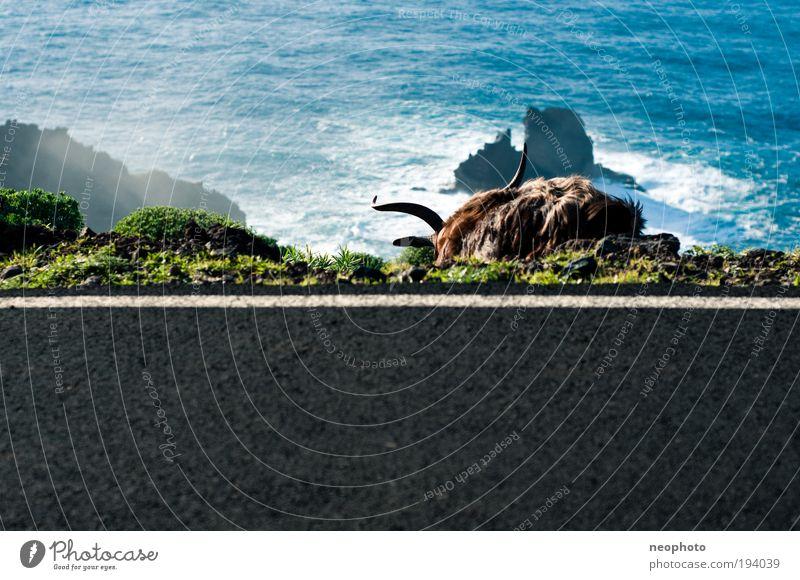 Bock auf Meer? Wasser Ferne Tier Landschaft Erde Felsen Insel Urelemente Wildtier Sehnsucht Schönes Wetter Ziegen Nutztier Morgen