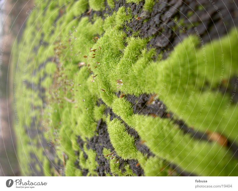 Moos bewachsen grün Natur