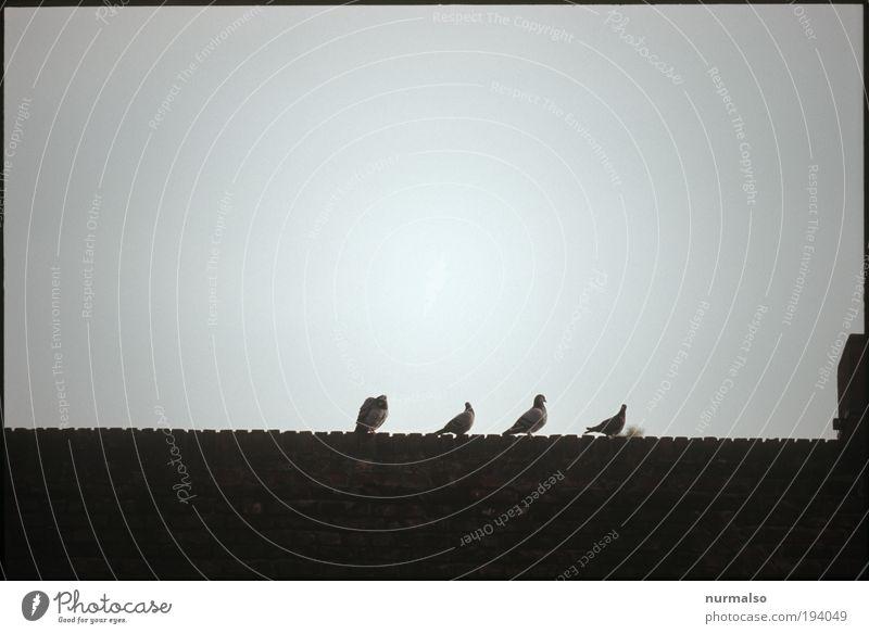 lieber vier Tauben . . . Tier Ferne Erholung dunkel Leben Freiheit Kunst Vogel elegant sitzen fliegen Wildtier Dach Tiergruppe Zeichen Kot