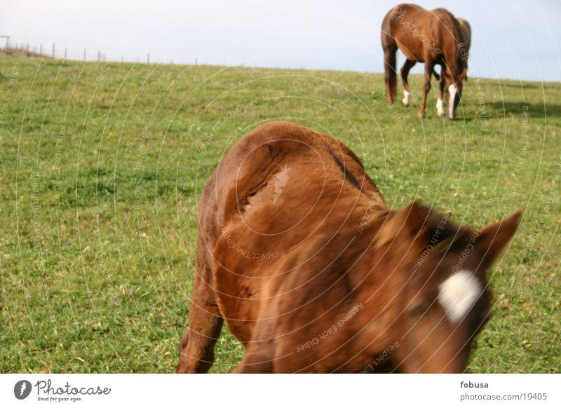 pferdische bewegung Wiese Gras Pferd Weide Schimmelpilze