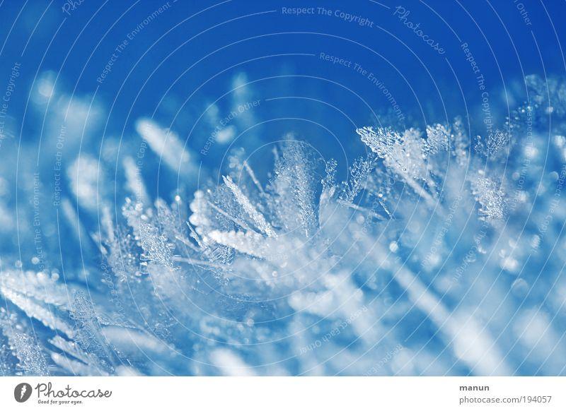 Gefiedert Design Erholung ruhig Winterurlaub Taufe Natur Wasser Eis Frost Schnee Coolness eckig fantastisch frisch kalt stachelig blau weiß schön ästhetisch