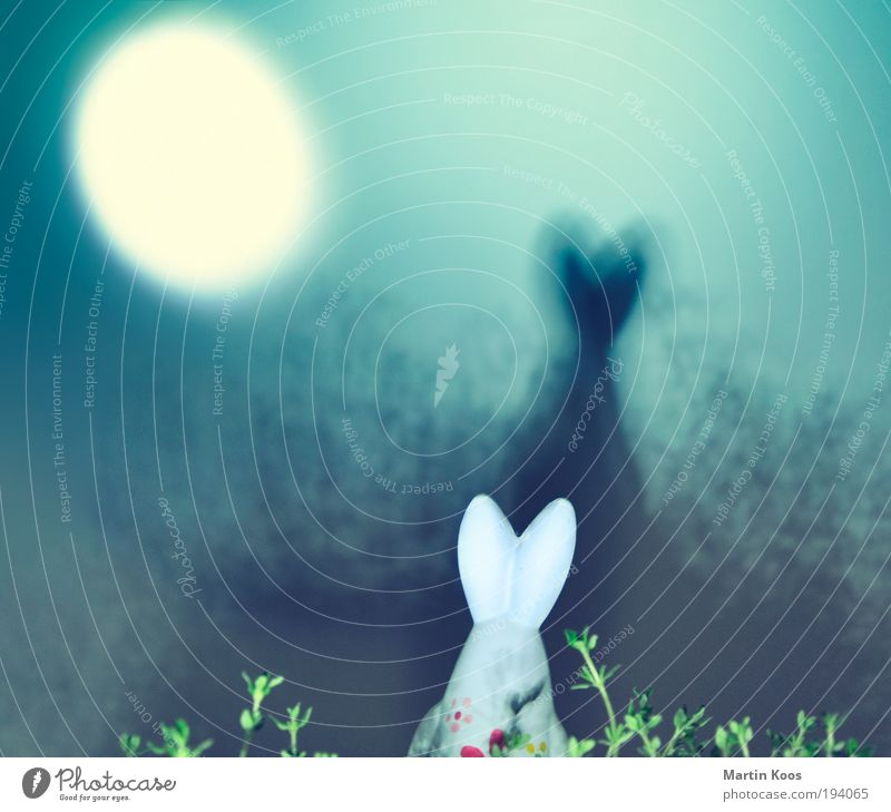 Ostertrip II Freude Blume Wald Wiese dunkel Frühling träumen Feste & Feiern Ohr Dekoration & Verzierung Ostern Mond Jagd skurril