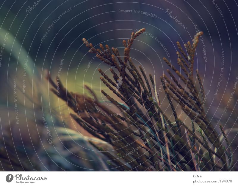 aufatmen und Licht tanken Natur grün blau Pflanze Winter Tier Erholung Gras Landschaft Kraft warten Umwelt Wachstum retro Sträucher Klima