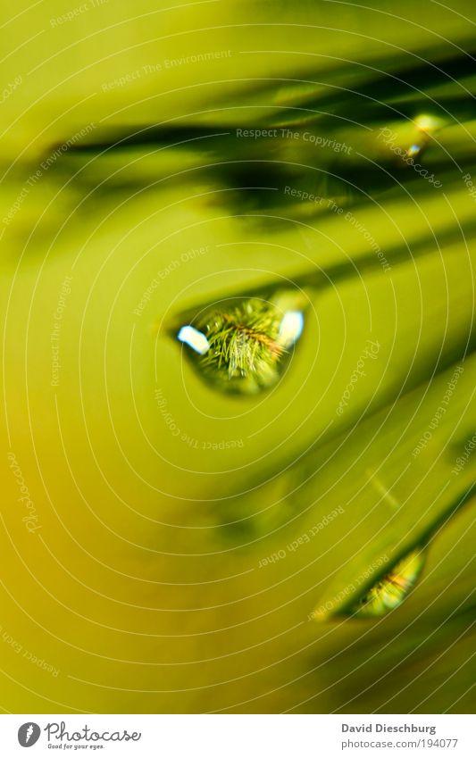 Natürlicher Baumschmuck Leben harmonisch Natur Pflanze Wassertropfen Frühling Sommer Grünpflanze Urwald grün silber Tau nass Nahaufnahme Detailaufnahme