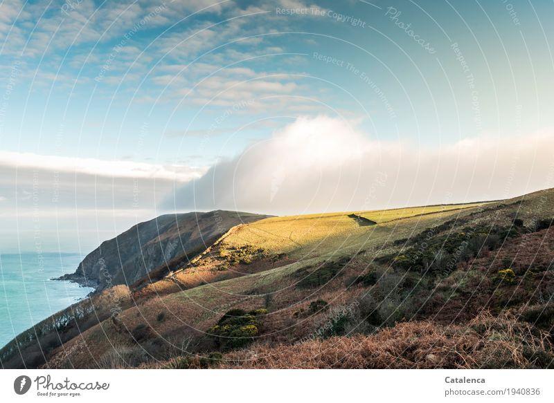 More Moor ... Himmel Natur grün Wasser Landschaft Meer Wolken Ferne Winter gelb Wiese natürlich Gras Freiheit braun Stimmung