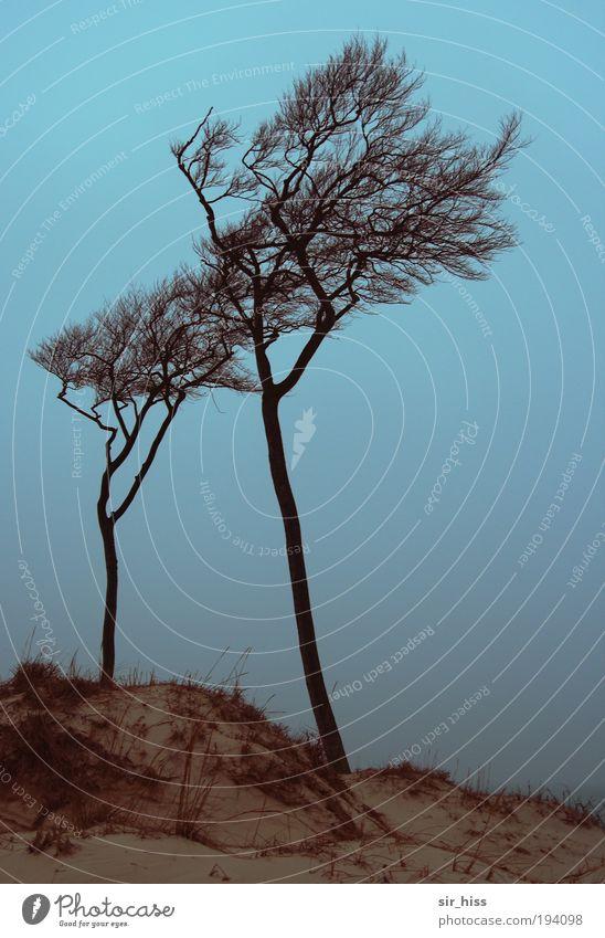 Weststrand im Morgenblauen Natur Wasser Baum Meer blau Pflanze Winter Strand Einsamkeit Gras träumen Traurigkeit Sand Landschaft Luft braun
