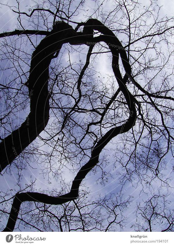 Bizarr Natur Himmel weiß Baum blau Pflanze Winter schwarz Wolken dunkel skurril bizarr