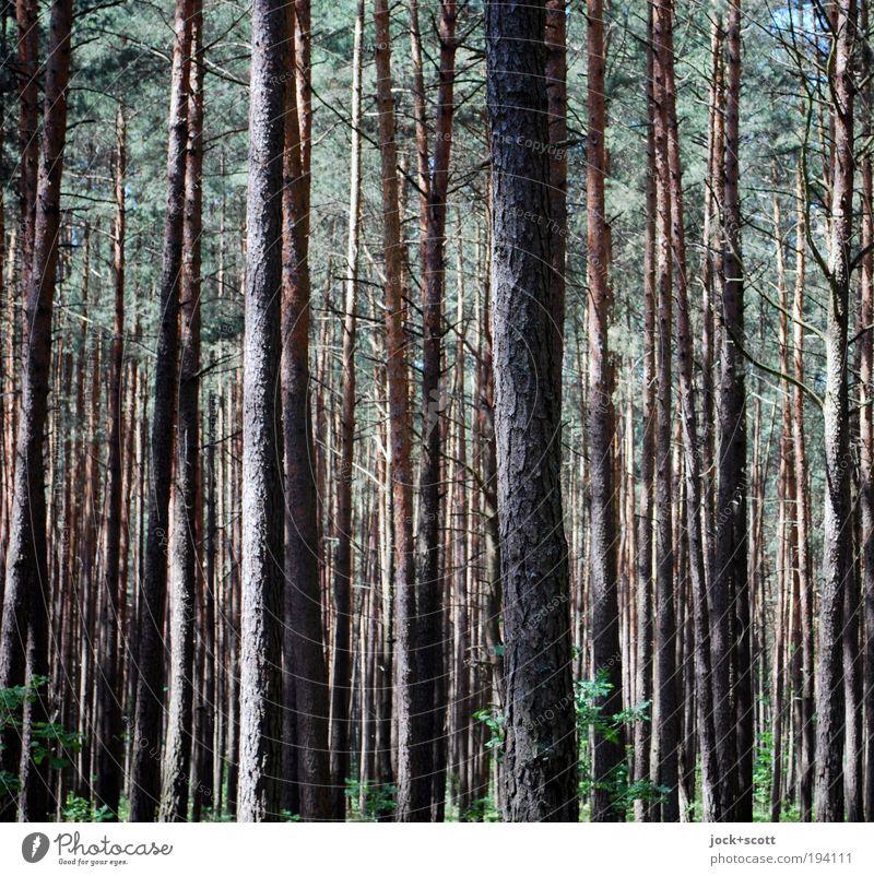 lauter Bäume Natur Baum Tier Wald Umwelt natürlich Holz Zeit braun Zusammensein Zufriedenheit authentisch stehen hoch Ausflug Schönes Wetter