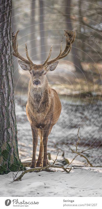Noch nen Rothirsch Pflanze Tier Wiese Feld Wald Wildtier Tiergesicht Fell Zoo 1 Fressen Blick Horn Farbfoto mehrfarbig Außenaufnahme Menschenleer