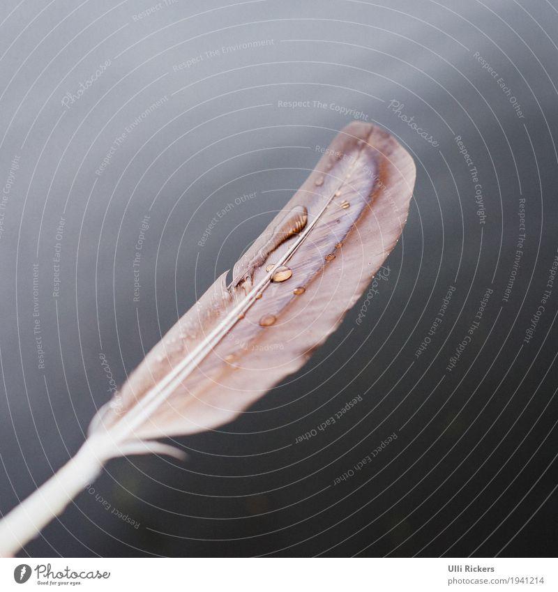 Plitscher, Plätscher, Feder. Umwelt Urelemente Wasser Herbst Winter schlechtes Wetter Regen See Fluss Tier Wildtier Vogel Taube Tropfen fliegen elegant