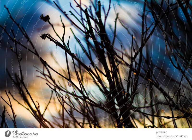 Turn it off Himmel Natur blau rot Pflanze Sonne Sommer Freude Wolken Umwelt Landschaft gelb Wiese Gefühle Frühling Glück