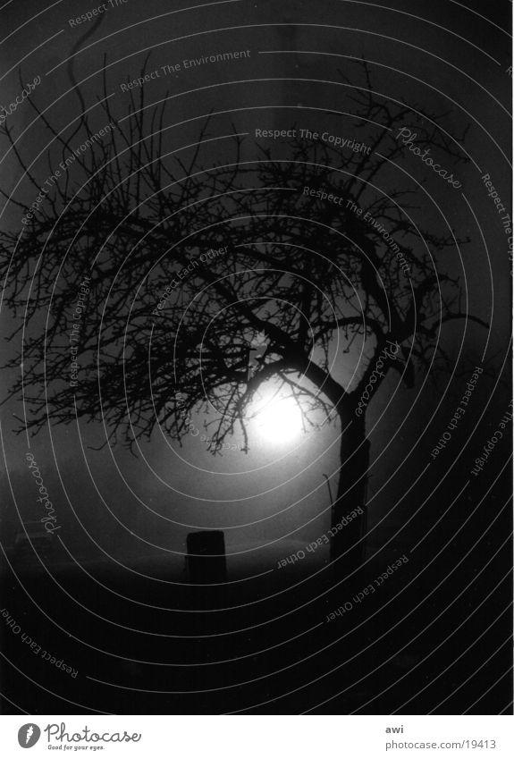 Nachtschatten Baum Mondschein Nebel Schwarzweißfoto Available Light Schatten Silhouette