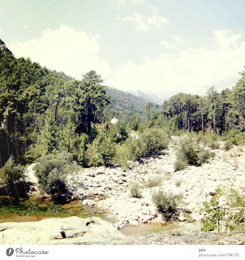 on the way up. Natur Wasser Himmel Baum Pflanze Sommer Wald Berge u. Gebirge Stein hell Felsen Erde Fluss Sträucher heiß genießen