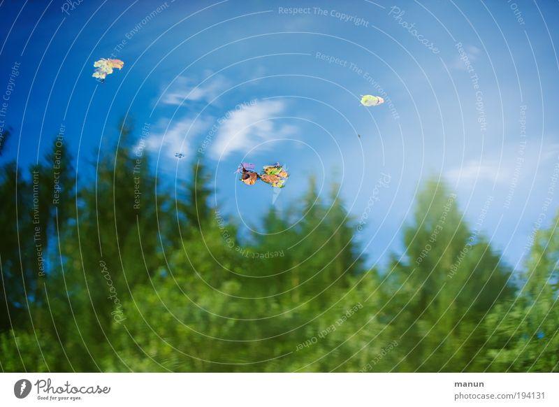 Spiegelei Natur Wasser Himmel Baum grün blau Sommer ruhig Blatt Einsamkeit Wald Leben Erholung Herbst Frühling See