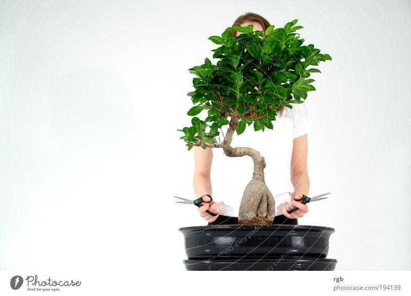 Durchblick Mensch Frau grün Erwachsene kalt Denken hell Gesundheit Arbeit & Erwerbstätigkeit natürlich Design modern ästhetisch authentisch Wachstum
