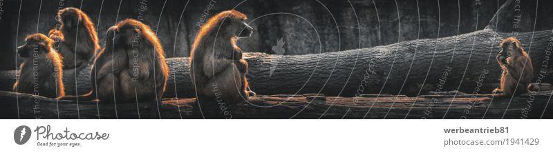 Distanz Sommer Einsamkeit Ferne Tierjunges Gefühle Deutschland Tierpaar Wildtier sitzen Tiergruppe Warmherzigkeit Schutz Lebewesen Baumstamm Säugetier Kunstwerk