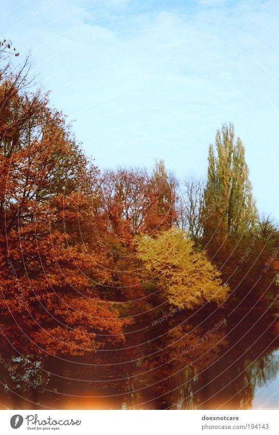 Autumn Revisited. Natur Baum Pflanze gelb Wald Herbst Fluss Herbstlaub herbstlich Lichtfleck Wasserspiegelung Light leak