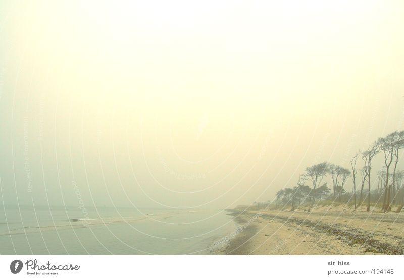 Weststrand im Abendnebel Natur Wasser Meer blau rot Einsamkeit gelb kalt Sand Landschaft Zufriedenheit braun Küste Wind Umwelt gold