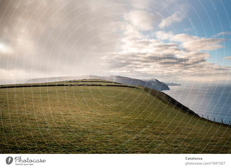 Weite Weide Winter wandern Natur Landschaft Pflanze Tier Himmel Wolken Nebel Gras Wiese Felsen Küste Meer Moor Sumpf Klippe Nutztier Schaf Herde Fressen