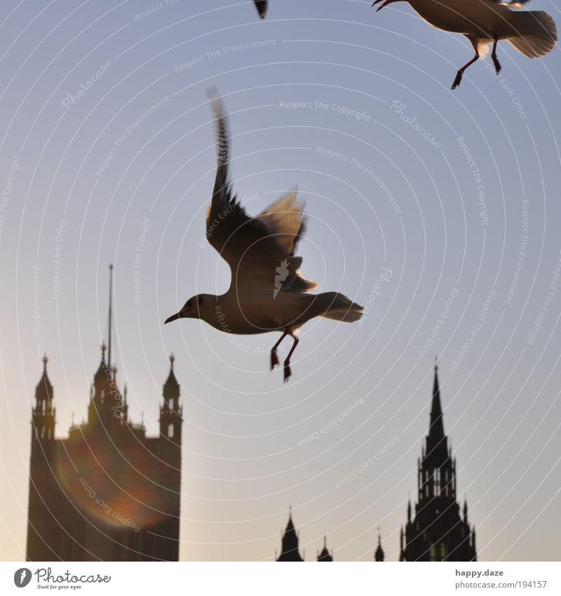 schwungvoll Himmel blau Tier Bewegung Freiheit Glück Zufriedenheit Kraft Vogel elegant fliegen frei Geschwindigkeit Perspektive Hoffnung ästhetisch