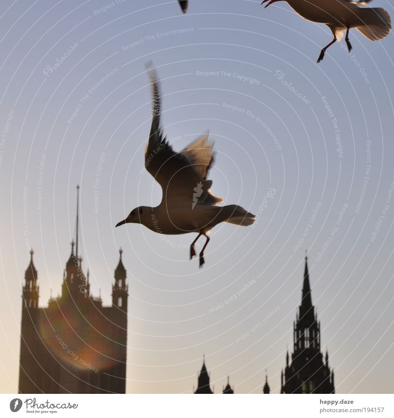 schwungvoll Himmel Sonnenlicht Tier Vogel Bewegung fliegen ästhetisch elegant frei Unendlichkeit Geschwindigkeit blau Lebensfreude Kraft Zufriedenheit