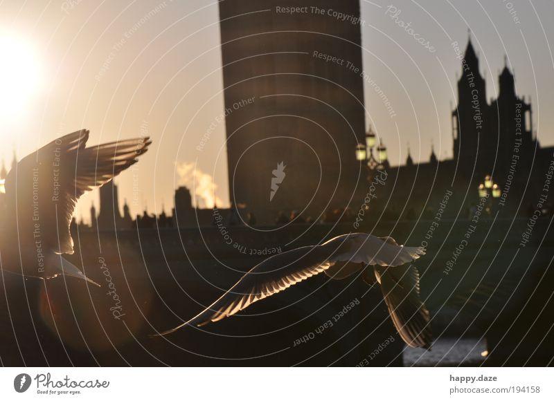 mit Schwung Himmel Tier Ferne Bewegung Freiheit Glück Zusammensein Kraft Vogel elegant fliegen frei Hoffnung ästhetisch Vertrauen Lebensfreude