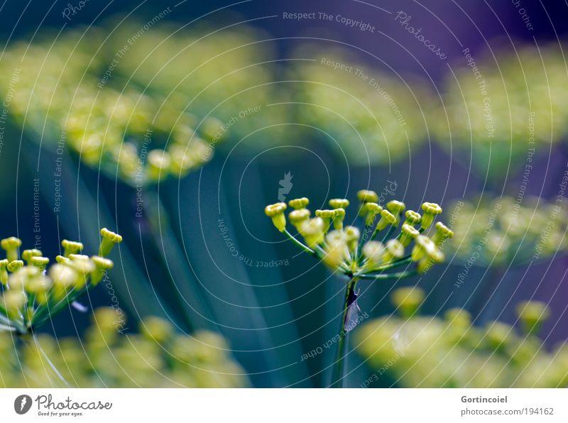 Farbenspiel Natur schön Blume grün Pflanze Sommer gelb Blüte Frühling Umwelt frisch Stern (Symbol) Wachstum violett Dekoration & Verzierung Landwirtschaft