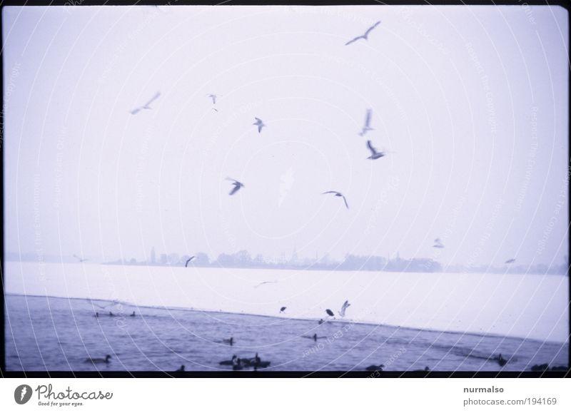 Montag Morgen Möwenschrei Umwelt Natur Landschaft Winter Klima schlechtes Wetter Nebel Eis Frost Küste Flussufer Havel Binnenschifffahrt Vogel Ente Schwarm