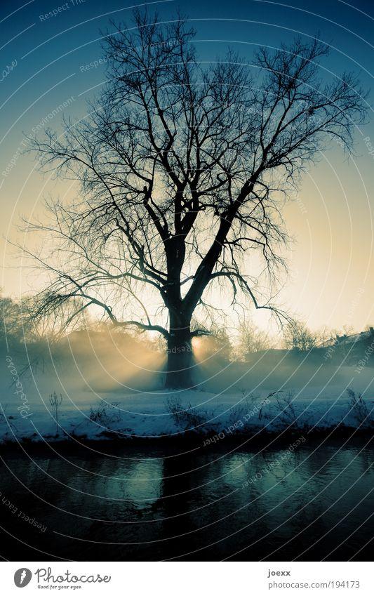 Der Tag erwacht Natur Baum blau Winter ruhig gelb kalt Schnee Erholung Park Landschaft Nebel Wetter Idylle Seeufer Flussufer
