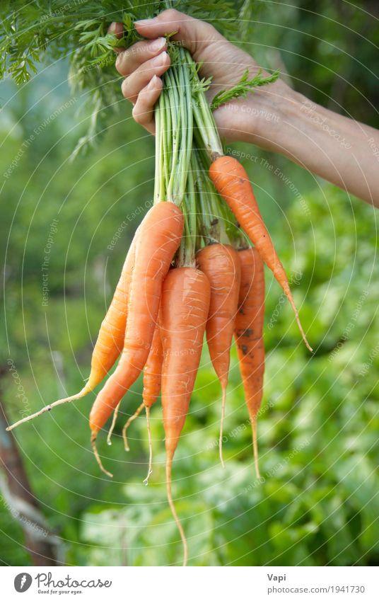 Bündel Karotten in einer Hand Mensch Frau Natur Jugendliche Pflanze Farbe grün Gesunde Ernährung Blatt Erwachsene gelb Essen natürlich Lebensmittel