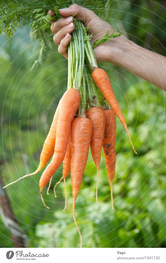 Mensch Frau Natur Jugendliche Pflanze Farbe grün Gesunde Ernährung Hand rot Blatt Erwachsene gelb Essen natürlich Lebensmittel