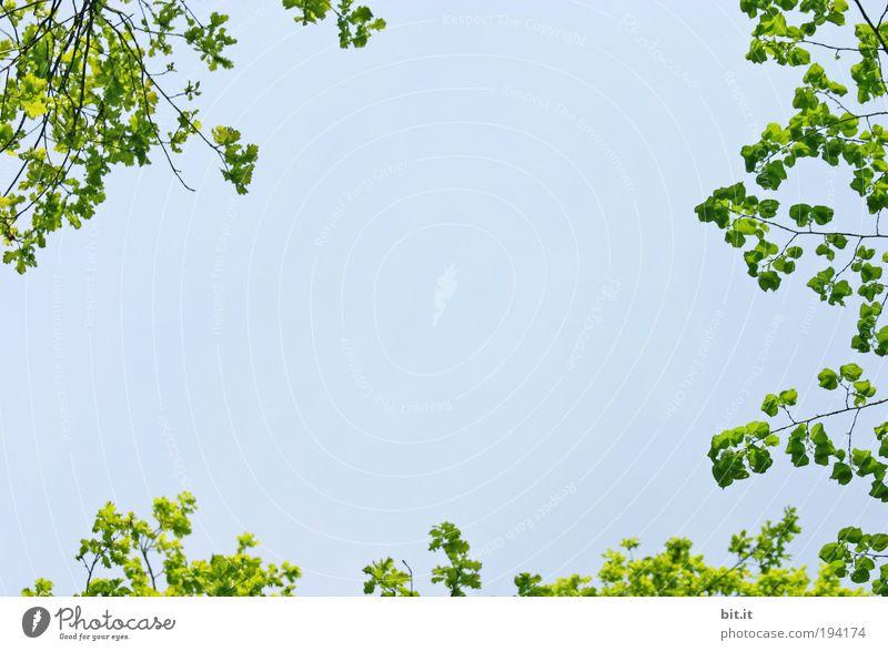 FRISCHE-BOX Natur Himmel Baum Sommer ruhig Blatt Frühling Freiheit Luft Hintergrundbild Design Umwelt Horizont Perspektive Ecke Romantik