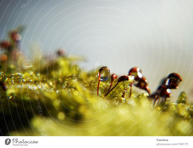 Erwachen Natur Sonne grün Pflanze Wiese Gras Park Landschaft hell braun Wetter Umwelt Wassertropfen nass Klima Moos