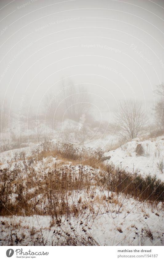 DER WINTER LÄSST UNS NICHT LOS! Umwelt Natur Wolken Horizont Winter schlechtes Wetter Nebel Eis Frost Schnee Pflanze Baum Wiese Feld Wald dunkel kalt