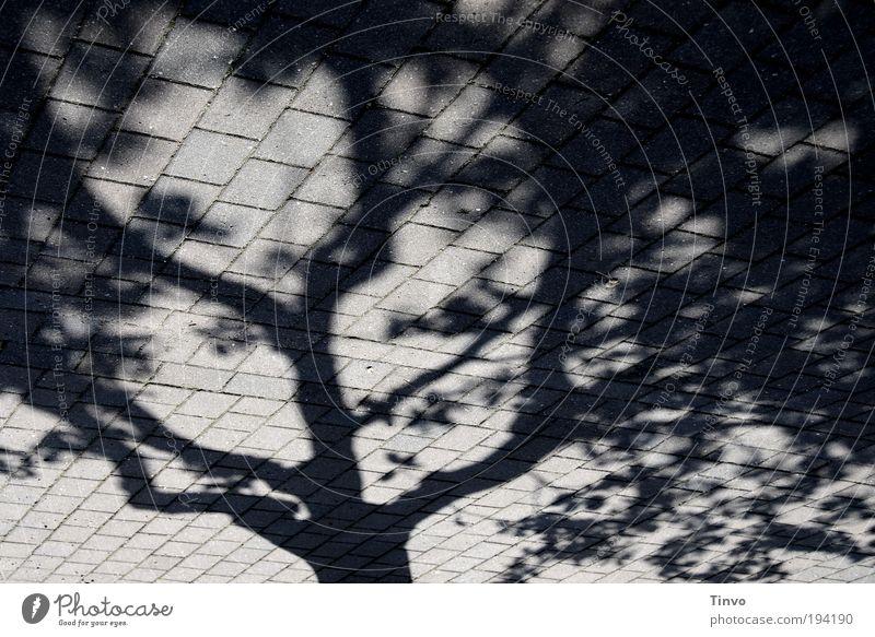 Schattenreich Schönes Wetter Baum Straße Wege & Pfade außergewöhnlich dunkel einzigartig grau schwarz verzweigt Baumschatten Zweige u. Äste gepflastert