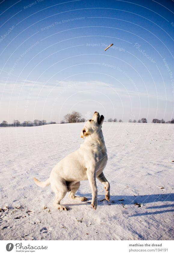 READY TO TAKE OFF II Hund Himmel Natur Baum Pflanze Winter Tier Wolken Umwelt Landschaft Wiese Schnee Spielen Bewegung springen Horizont