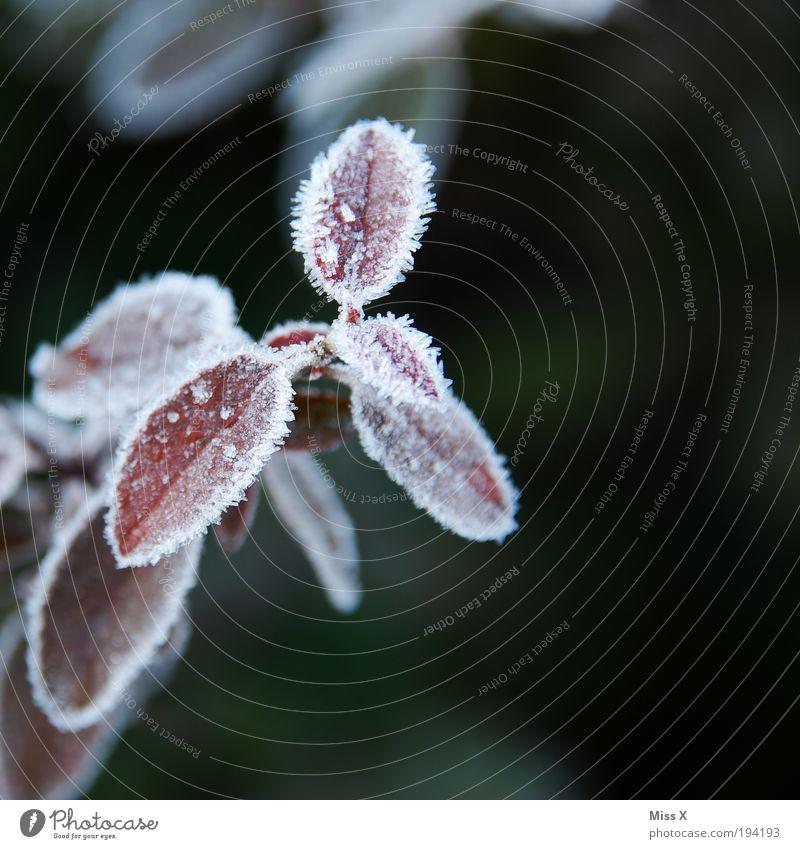 Frost Wassertropfen Frühling Herbst Winter Klima Wetter Eis Pflanze Blatt Park kalt Ast Raureif Farbfoto Gedeckte Farben Außenaufnahme Nahaufnahme