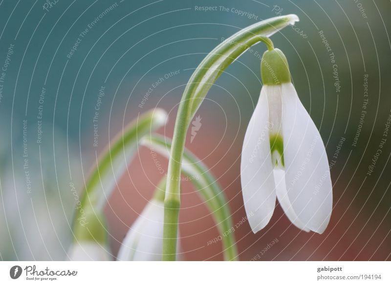 es wird wärmer Natur Pflanze Winter Blatt Wiese Blüte Gras Frühling Wärme Landschaft Umwelt frisch Wandel & Veränderung beobachten Lebensfreude Zeichen
