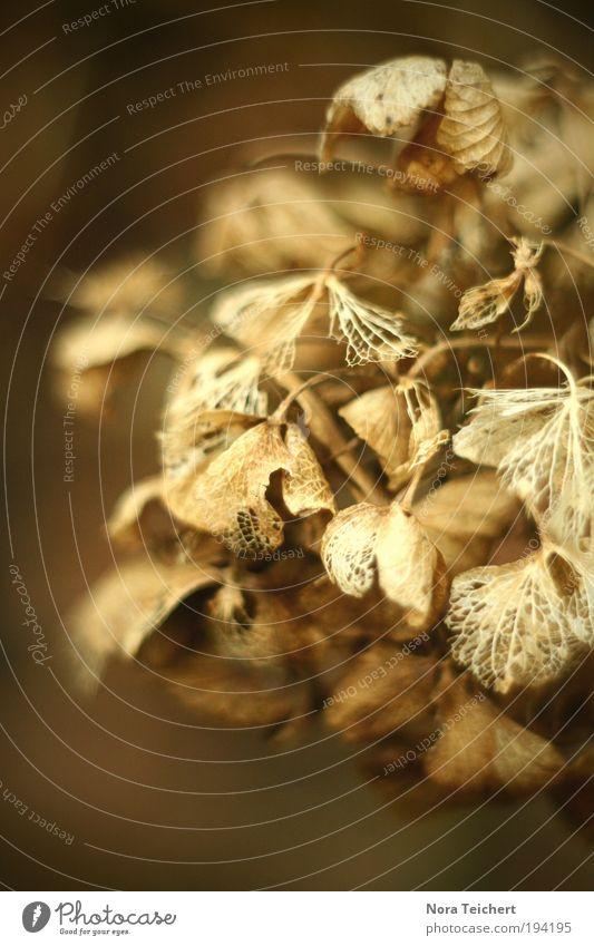 Kunst. Natur alt schön Pflanze Winter Blatt Umwelt Herbst Blüte ästhetisch Wandel & Veränderung Sträucher Vergänglichkeit vertrocknet welk verblüht