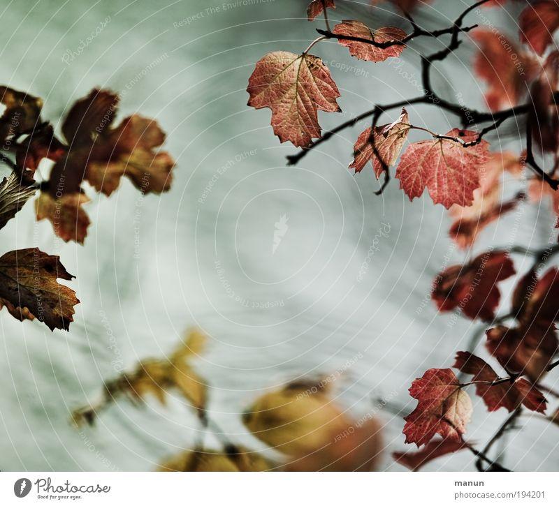Bunter Reigen Natur Baum Erholung Blatt ruhig Leben Traurigkeit Herbst Tod Zeit Vergänglichkeit Wandel & Veränderung Herbstlaub herbstlich Gartenarbeit