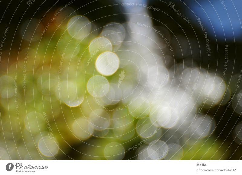 Frühling mit -7 Dioptrin Wasser grün träumen glänzend frisch Kreis Punkt leuchten Unschärfe abstrakt