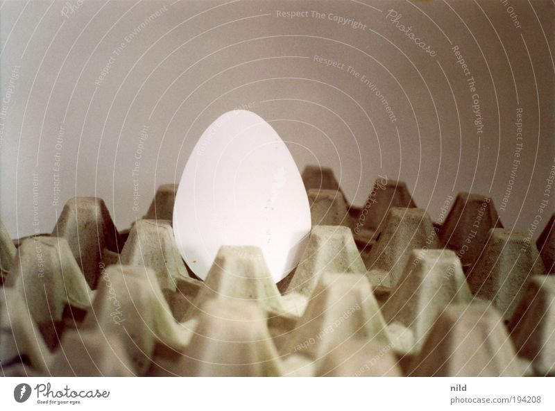 Das ist kein Ei! Lebensmittel Karton Verpackung Billig Vorfreude Ostern Geburt trist einfarbig graphisch Symbole & Metaphern Auferstehung Osterei Farbfoto
