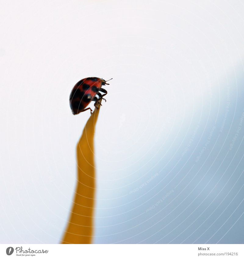 Klettermax Himmel Pflanze Blume Blatt Tier Haus Wiese Gefühle klein Glück Blüte Park Kraft Klettern Käfer krabbeln