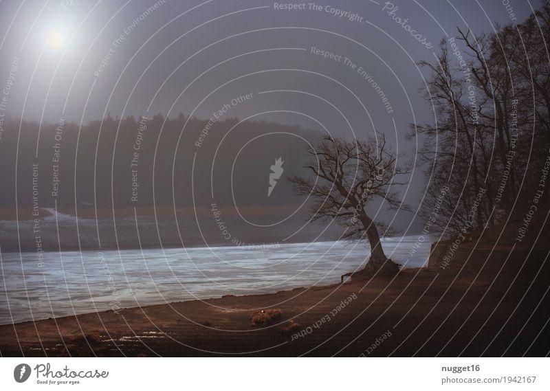 morgens am Edersee Umwelt Natur Landschaft Pflanze Erde Sand Wasser Mond Winter Schönes Wetter Nebel Eis Frost Baum Wald Hügel Küste Seeufer Ederstausee