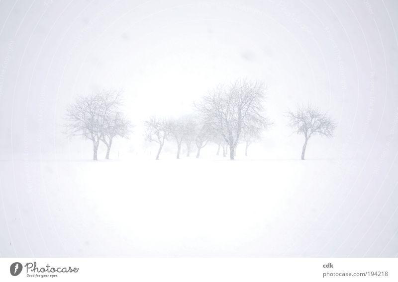 grau in grau Natur Baum Winter ruhig Einsamkeit kalt Schnee Wiese Tod Schneefall Park Landschaft Stimmung Feld Nebel Umwelt